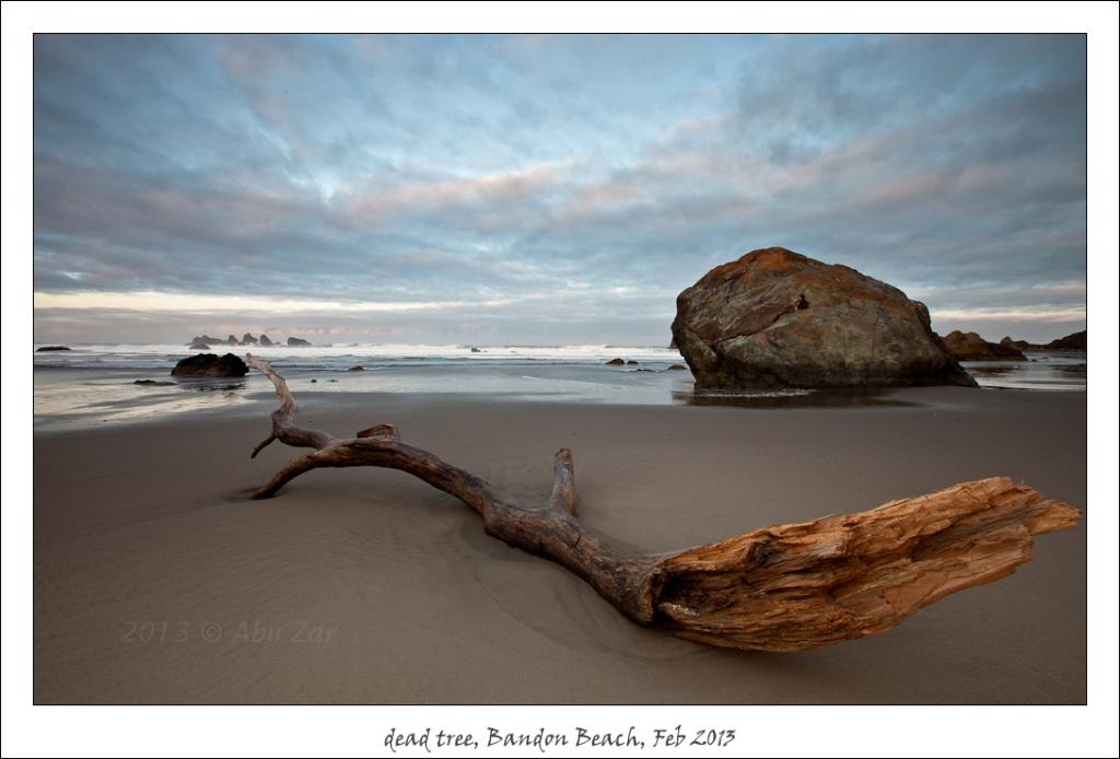 tree,beach,OR