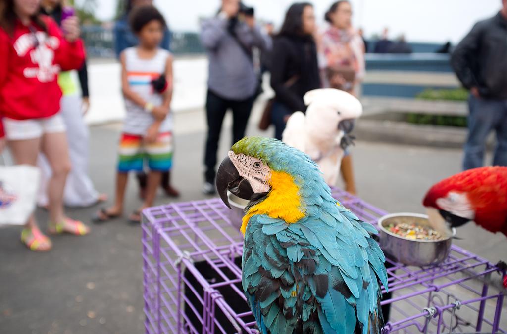santamonica_macaws
