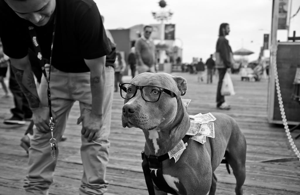 santamonicapier_dog