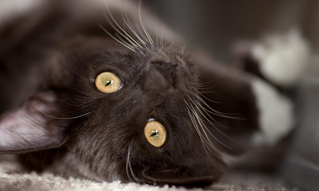 feline_eyes