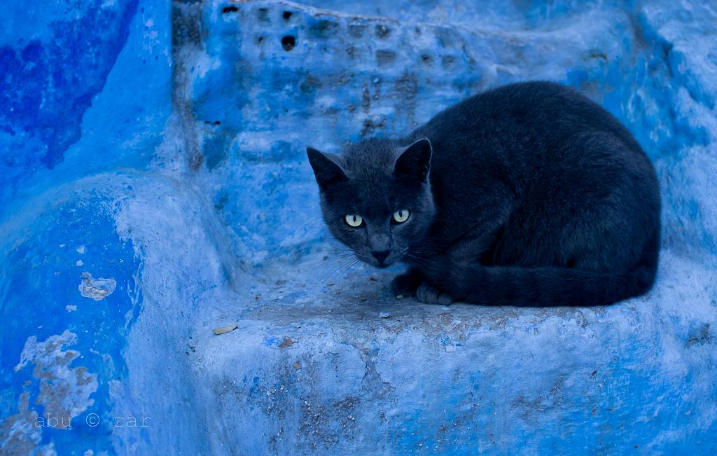 chefchoune_cat