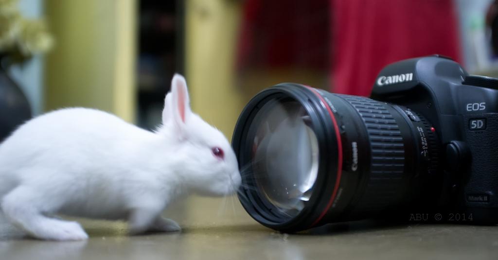 not_camera_shy